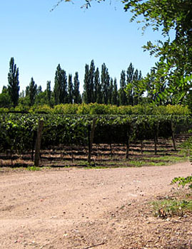 Algodon Wine Estates